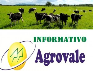 Informativo Agrovale